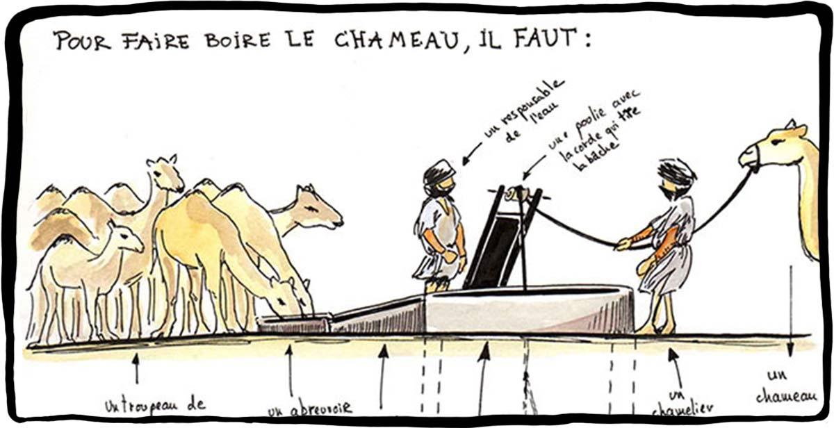 Mauritanie 2014 - Faire boire un chameau